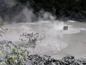 Rotorua 36 Mud Pools