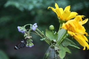 Glass Butterfly on flower 2
